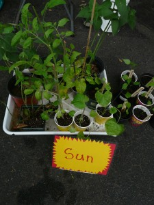 DNCA Plant swap 2011 005