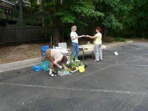 DNCA Plant swap 2011 002